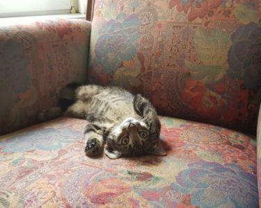 Hoeveel kost de aanschaf van een kitten - FinanceMonkey
